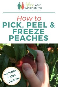 Enjoy the fresh goodness of peaches year-round. We show you in three easy steps how to pick, peel, and freeze peaches. #peaches #fall #autumn #harvest #freeze